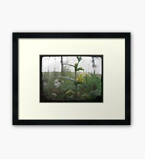 Yellow petals Framed Print