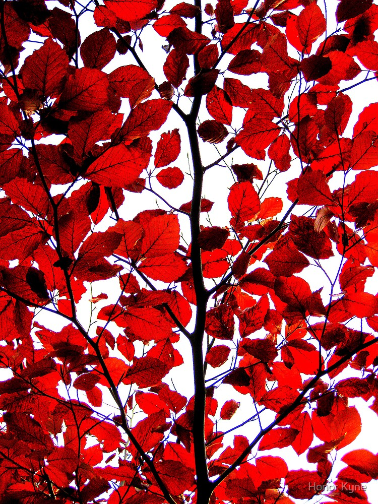 Vibrant Autumn Leaves by Honor Kyne