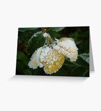 Frosted Wild Rose Greeting Card