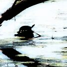 Turtle by TLWhite