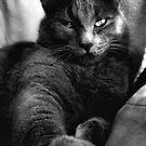 Cat Black&White by TLWhite