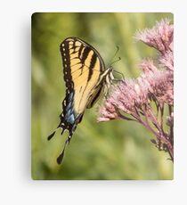 Eastern Tiger Swallowtail Profile Metal Print