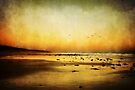 Heatwave Evening by Heather Prince
