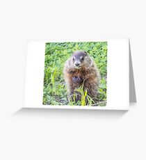 Groundhog caught midcrunch Greeting Card