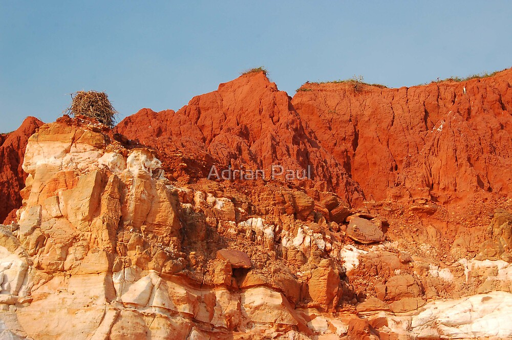 Osprey & Nest, Pindan Cliffs, James Price Point ,Broome WA by Adrian Paul