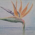 A coloured pencil drawing of a flower by Stefan Maguran
