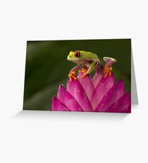 The young adventurer V2 Greeting Card