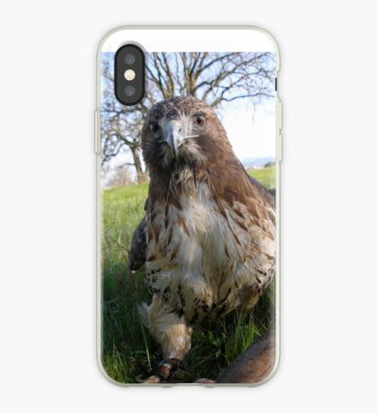Griffon 17 iPhone Case