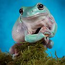 White tree frog - blue phase by Angi Wallace