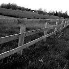 Fence Black&White by TLWhite