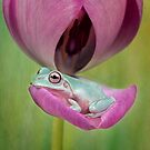 Resting Whites tree frog by Angi Wallace