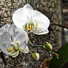 Painted Orchid by Creative Captures