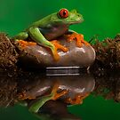 Red eyed tree frog in pond by Angi Wallace