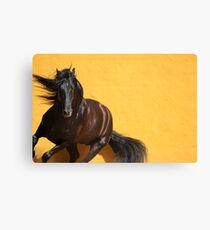 Majestic Stallion Canvas Print