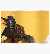 Majestic Stallion Poster