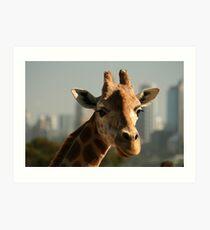 City Dwelling Giraffe Kunstdruck