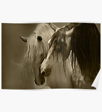 The beauty of the Horse.  Poster