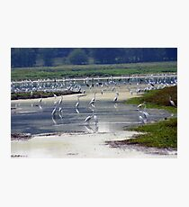 Estuary Photographic Print