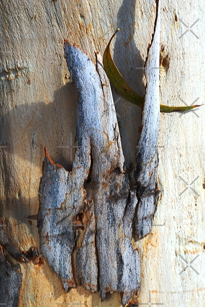 Eucalyptus Bark by Joy Watson