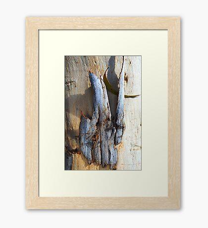 Eucalyptus Bark Framed Print
