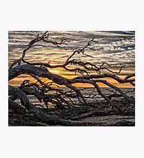 driftwood beach Photographic Print