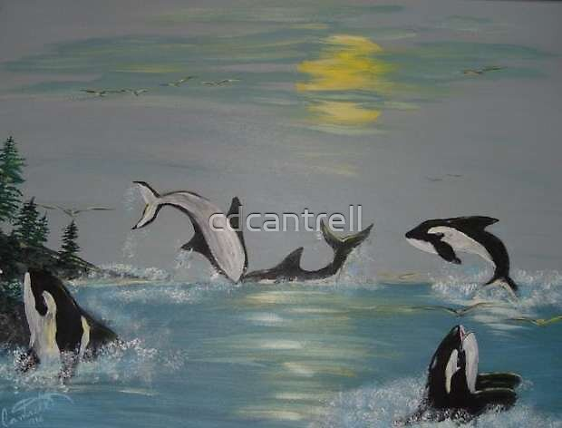 Killer whales at play by cdcantrell