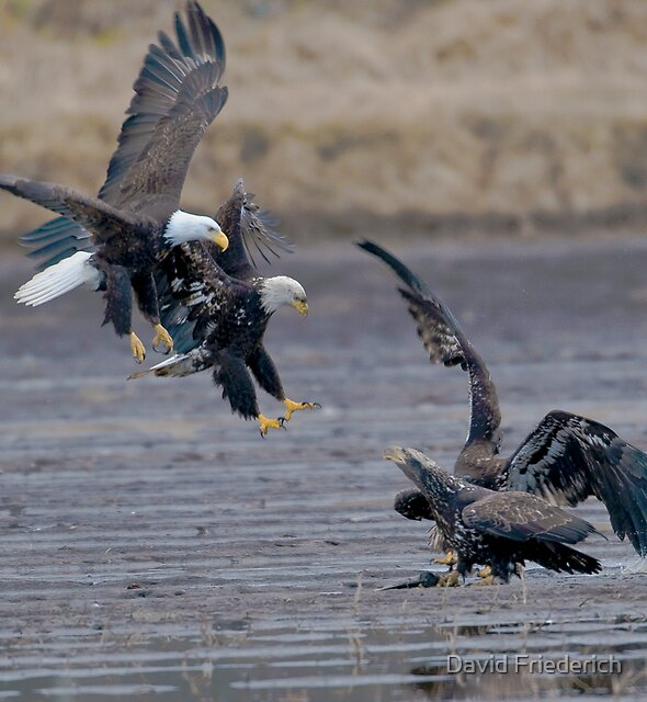 Competition by David Friederich