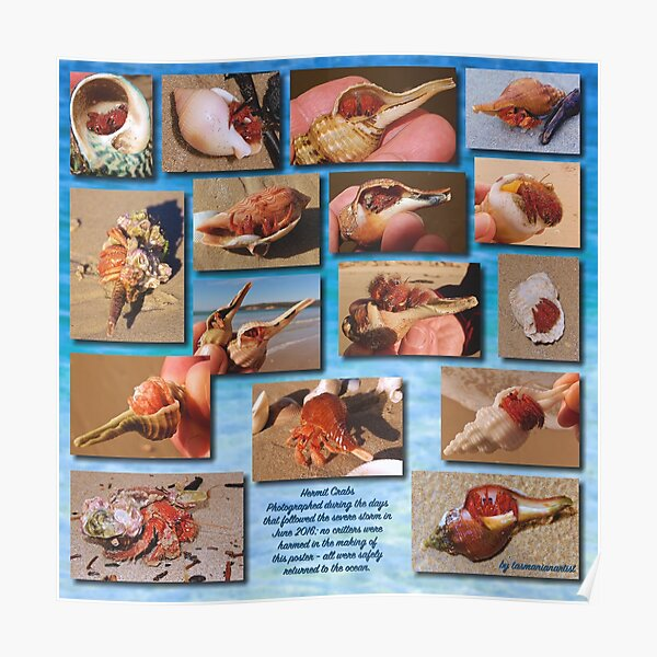 CRITTERS ~ MICRO TALE ~ Hermit Crabs by tasmanianartist Poster