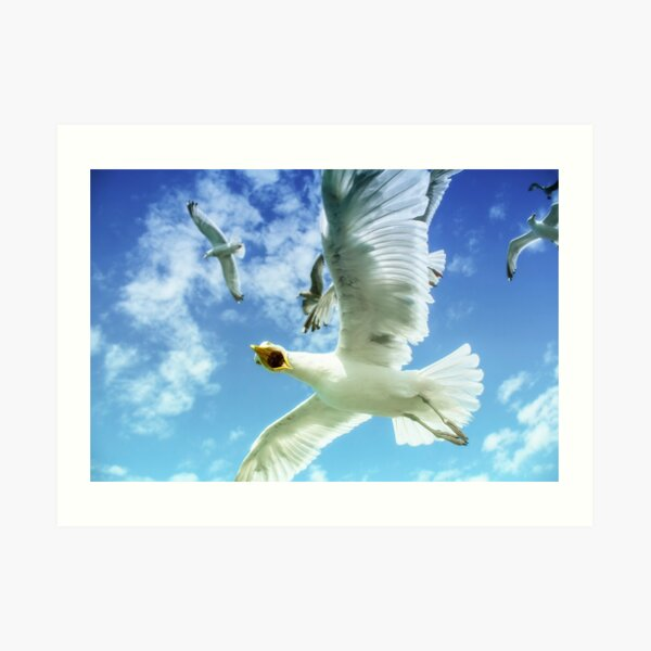 Starving Brighton Gulls Art Print