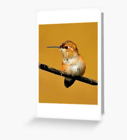 HUMMINGBIRD POSE Greeting Card