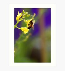 Hungry Bee Art Print