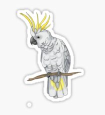 Sulphur Crested Cockatoo Sticker