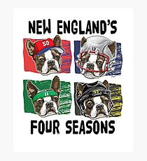 The Four Seasons of New England Sports Dogs  Photographic Print