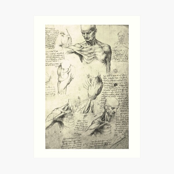 Anatomical drawing by Leonardo Da Vinci of a Man's neck and shoulders.  Circa 1510 Art Print