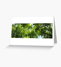 Green Forest Canopy Greeting Card