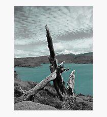 Stillness Photographic Print