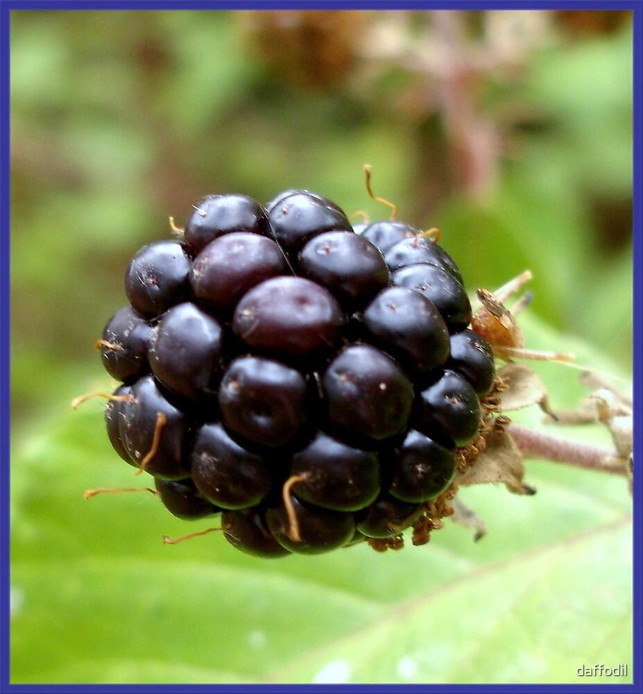 Wild blackberry  by daffodil