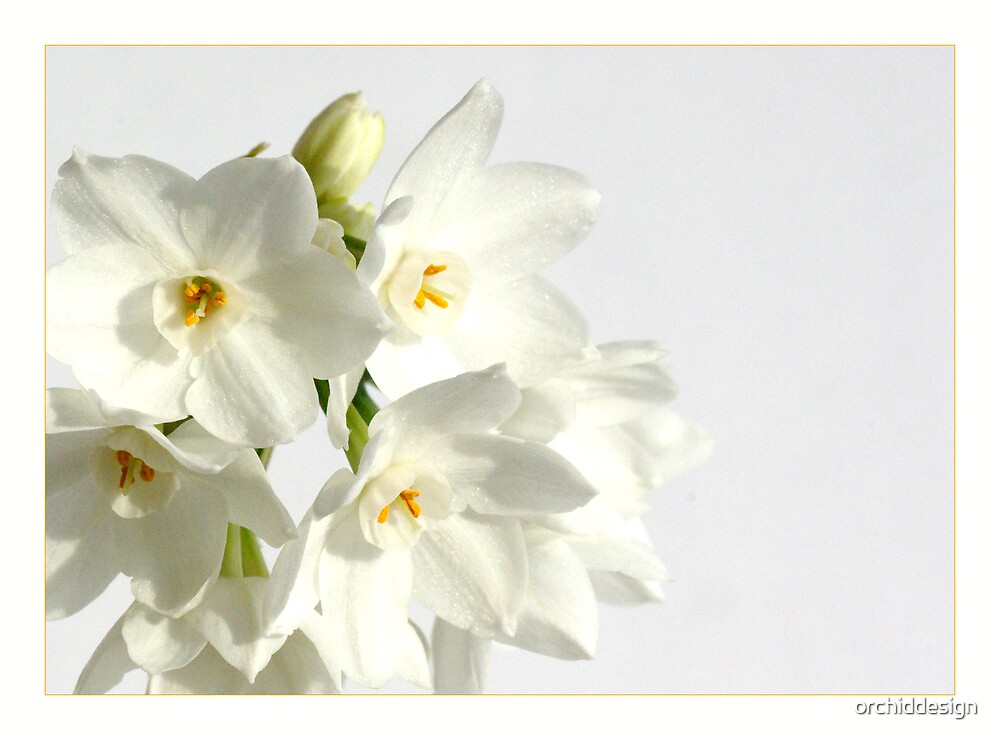 Paper White II by orchiddesign
