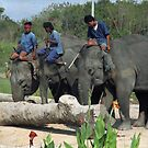 Elephants working in Thailand by Bev Pascoe