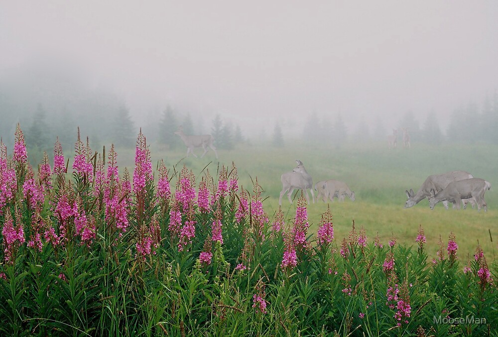 Fireweed deer pasture by MooseMan