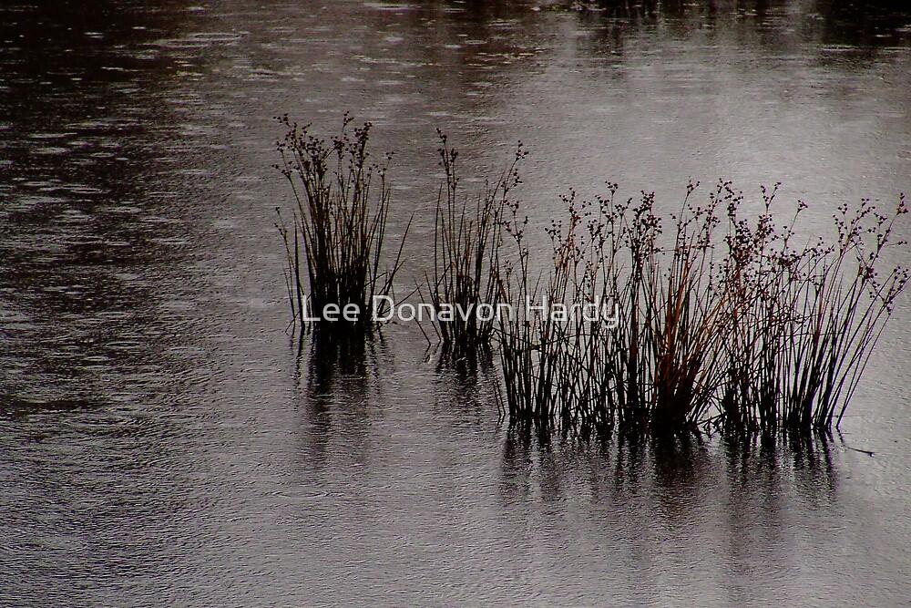 Rainy Day by Lee Donavon Hardy