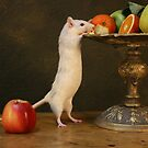 curious rat by danapace