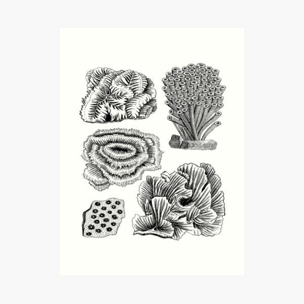 Coral Reef Sea Animals   Oceanography Marine Biology Art Print