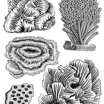 Coral Reef Sea Animals | Oceanography Marine Biology by encyclo-art