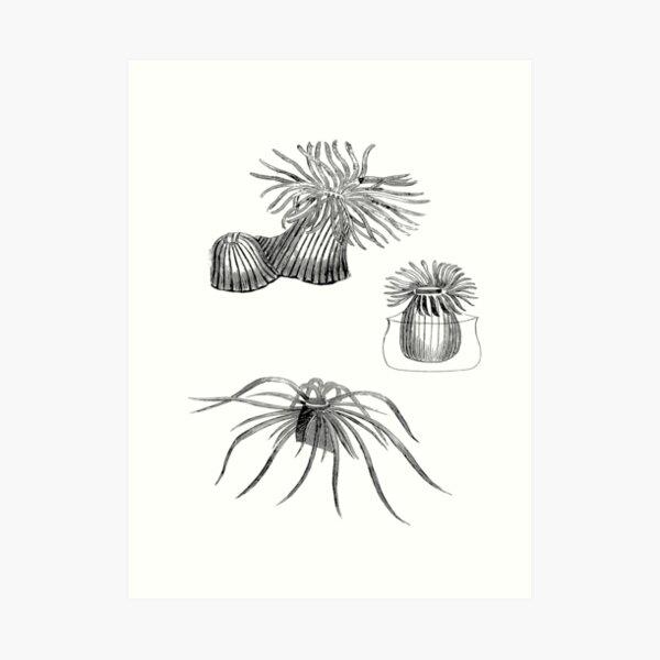 Coral Reef Sea Animals   Oceanography Natural History Art Print