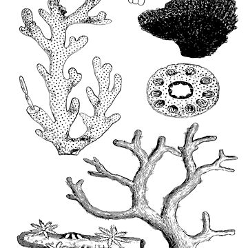 Marine Biology Coral Reef | Oceanography Natural History by encyclo-art