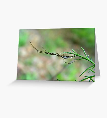 Long jaw argiope  Greeting Card
