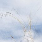 Snow Grass by Ann Garrett