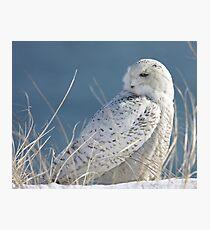Snowy Owl in hiding Photographic Print