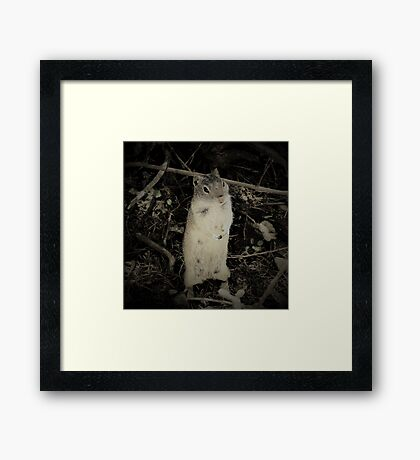 Young Forager Framed Print
